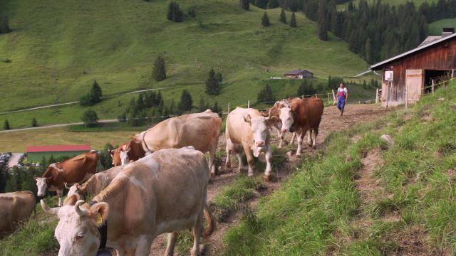 La vie à l'Alpage