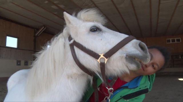 Des chevaux à adopter