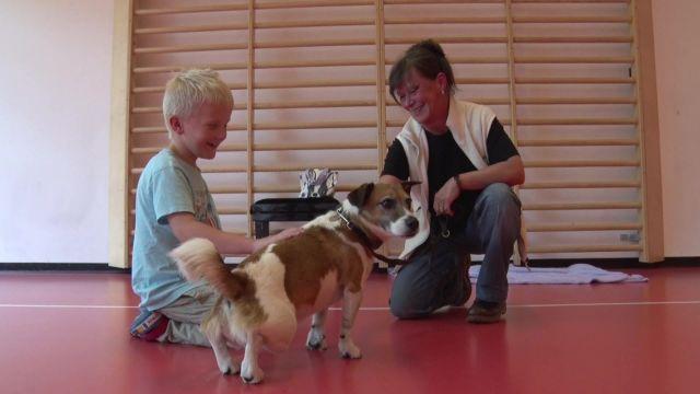 Des cours PAM pour bien réagir face à un chien errant