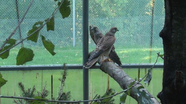 La Vaux Lierre, un centre de soin pour oiseaux sauvages