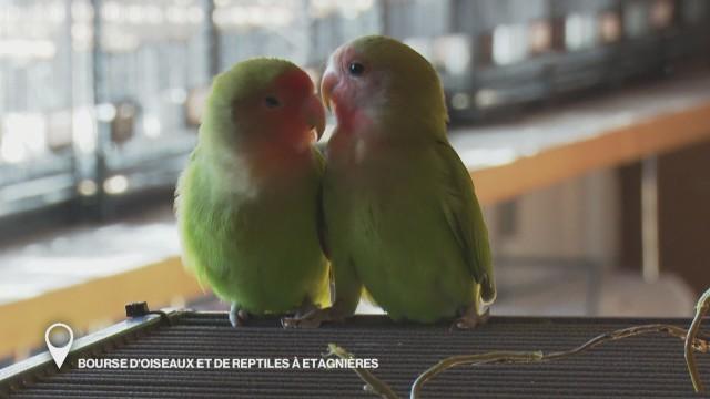 Bourse d'oiseaux et de reptiles à Etagnières