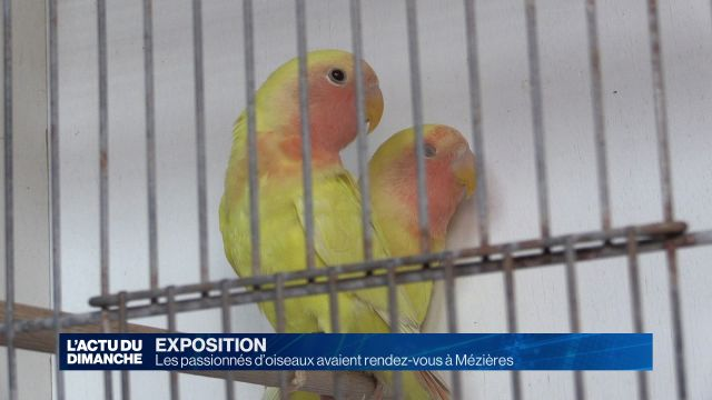 Les passionnés d'oiseaux avaient rendez-vous à Mézières