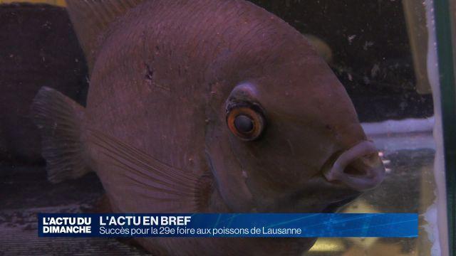 Succès pour la 29e foire aux poissons de Lausanne