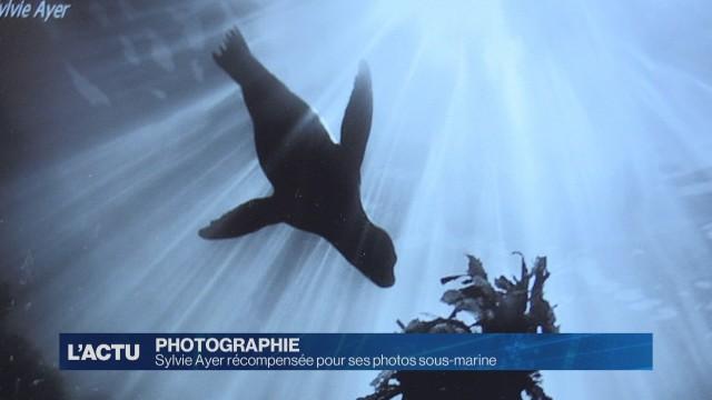 Sylvie Ayer récompensée pour ses photos sous-marine.