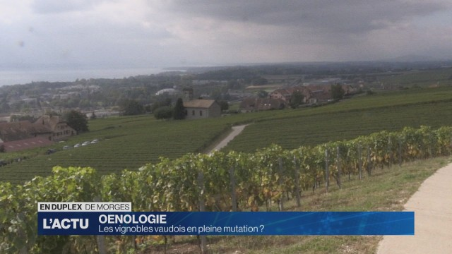 La Suisse alémanique, eldorado des vignerons vaudois ?