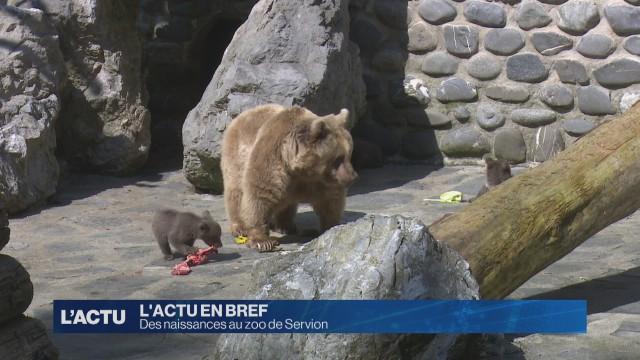 Voici les petits nouveaux du zoo de Servion