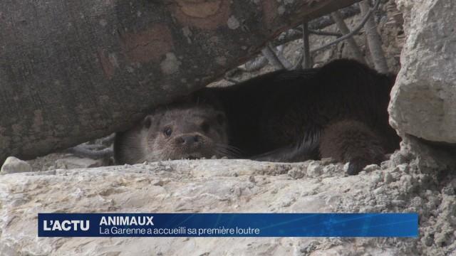 Le zoo de La Garenne a accueilli sa première loutre