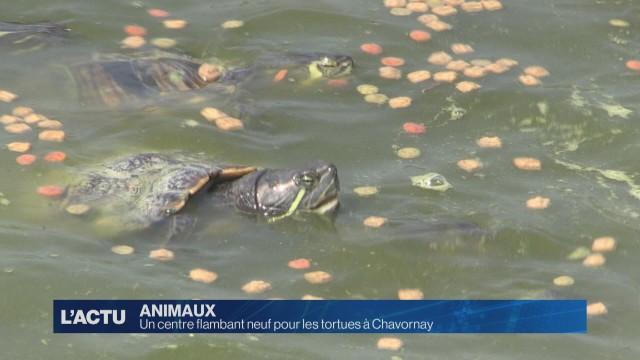 Un centre flambant neuf pour les tortues à Chavornay
