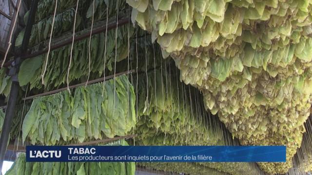 Les producteurs de tabac sont inquiets pour leur avenir