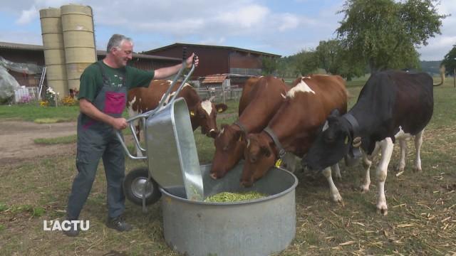 Agriculteurs en panne de fourrage