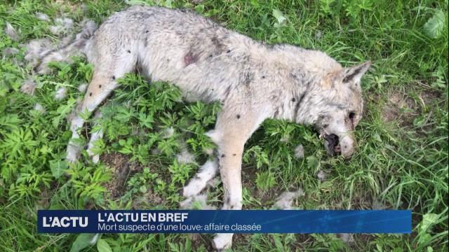 Mort suspecte d'une louve: affaire classée