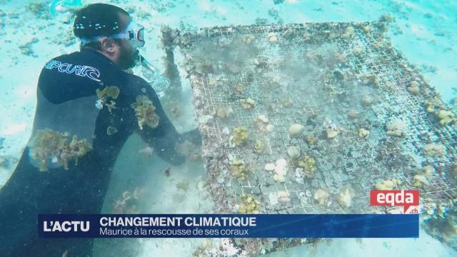 Maurice à la rescousse de son écosystème marin