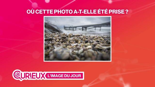 Des milliers de coquillages envahissent Pully