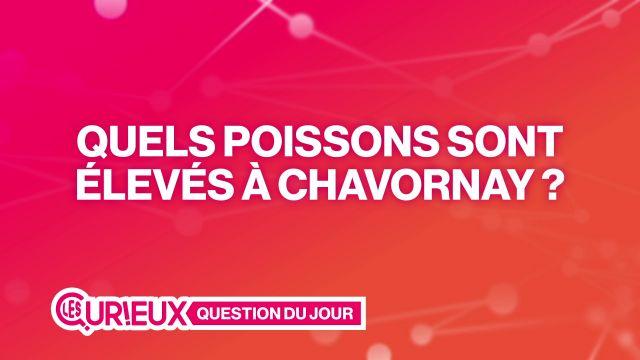 Quels poissons sont élevés à Chavornay ?