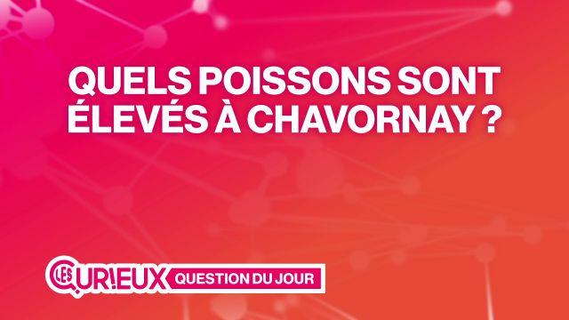 Quel président français est fan de pralinés lausannois ?