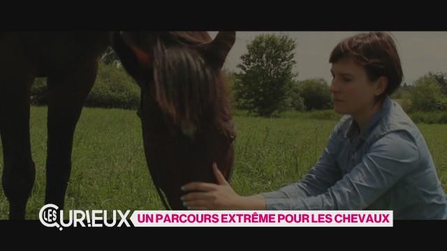 Un parcours extrême pour les chevaux