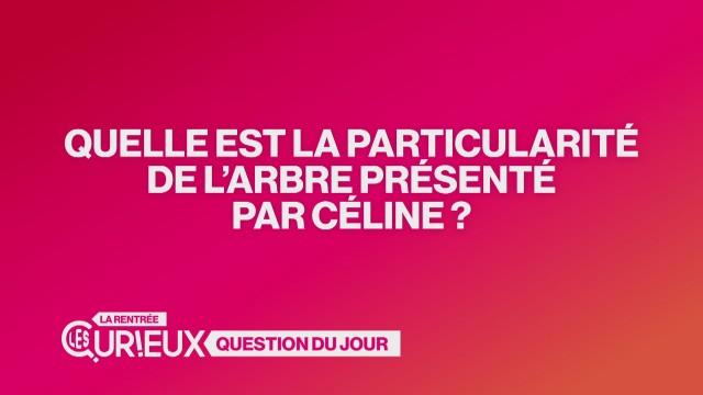 Quelle est la particularité de l'arbre présenté par Céline ?