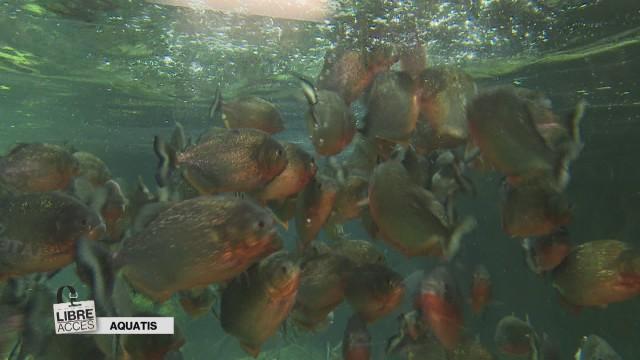 Derrière les vitres des aquariums d'Aquatis