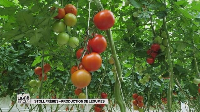 Sous les serres du plus grand producteur suisse de légumes
