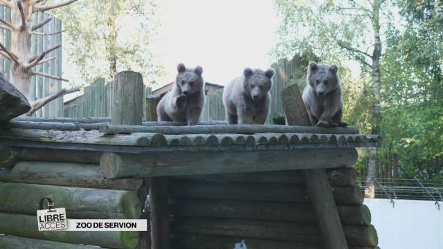 Dans les enclos du Zoo de Servion