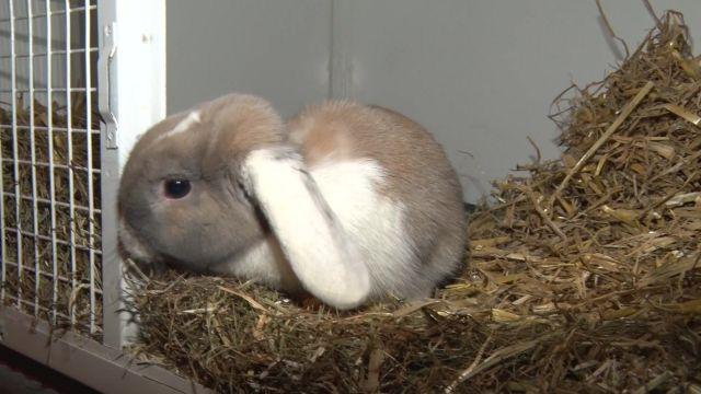 Rest'OZ'animaux, les restos du cœur pour animaux