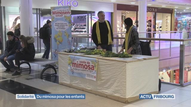 Du mimosa pour les enfants