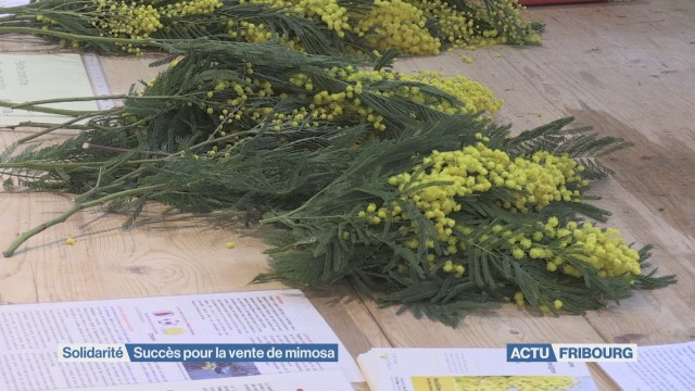 Le mimosa rapporte 70'000 francs