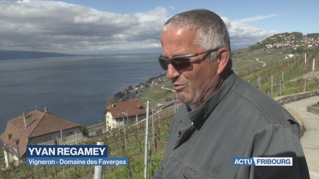 Vignes fribourgeoises entre des mains vaudoises