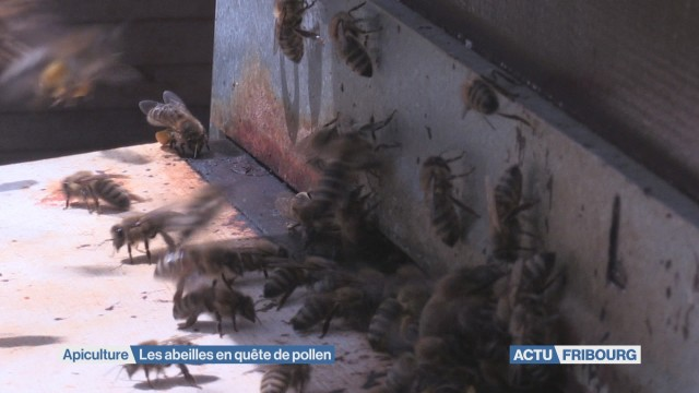 Les abeilles à la quête de pollen