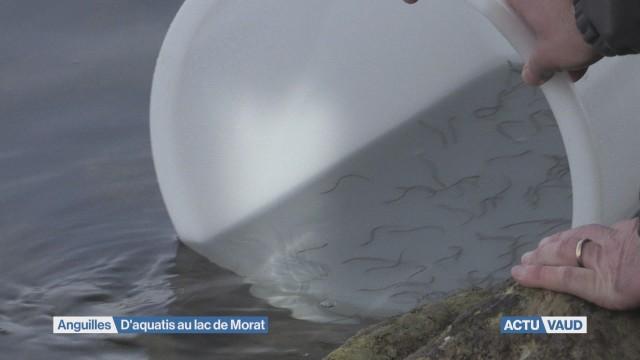 D'aquatis au lac de Morat