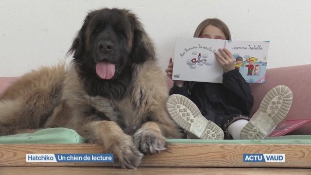 Hatchiko : chien exceptionnel