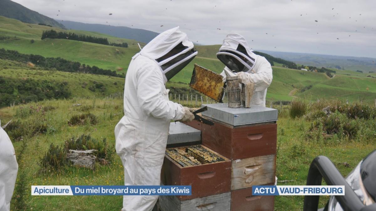 Du miel broyard chez les Kiwis