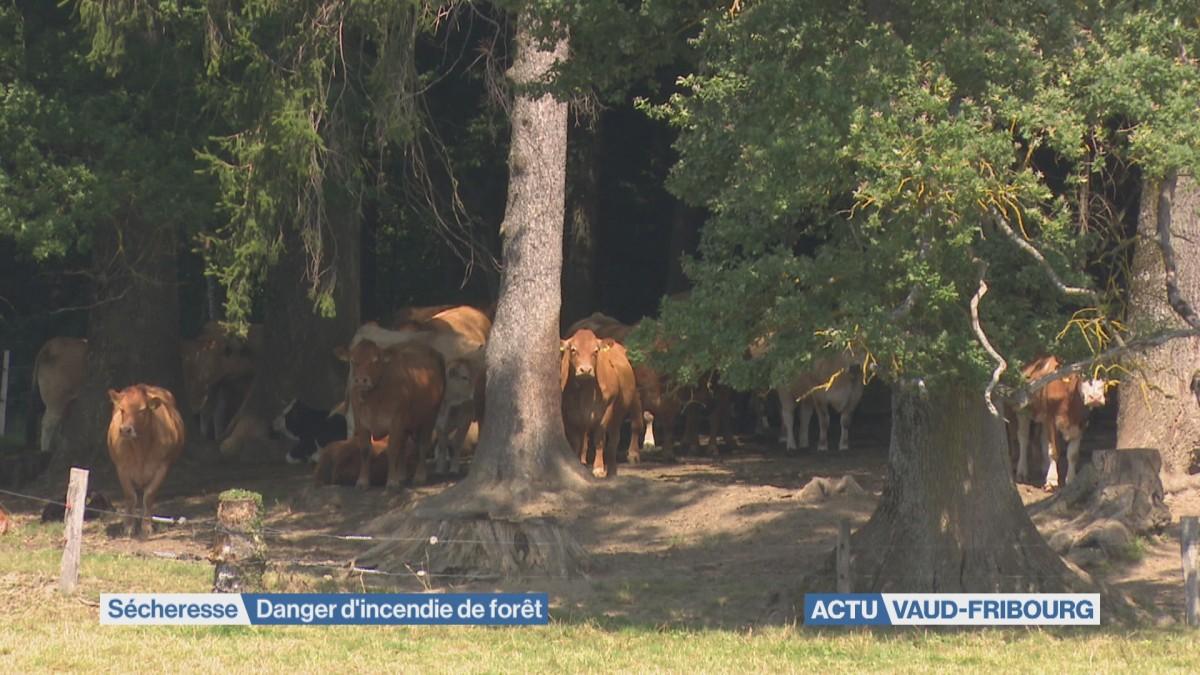 Danger d'incendie de forêt