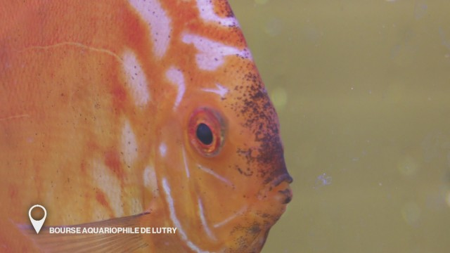 Bourse aquariophile de Lutry