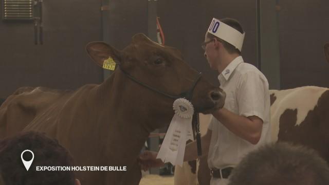 Exposition Holstein de Bulle