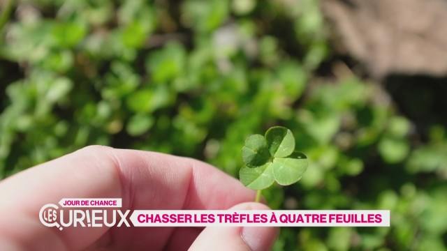 Chasser les trèfles à quatre feuilles
