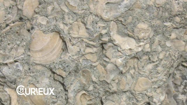 Des fossiles à Lausanne