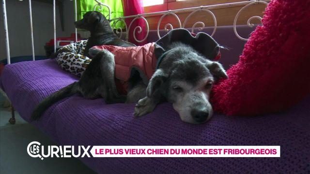 Le plus vieux chien du monde est fribourgeois