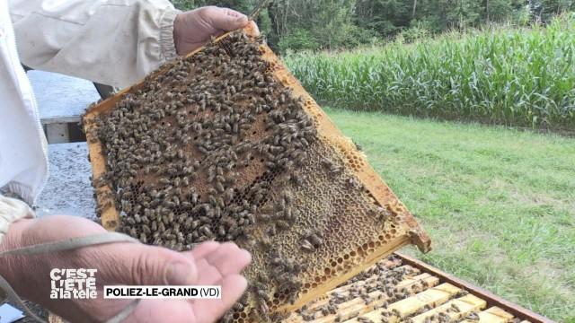 Portrait d'Alain Perrier, apiculteur