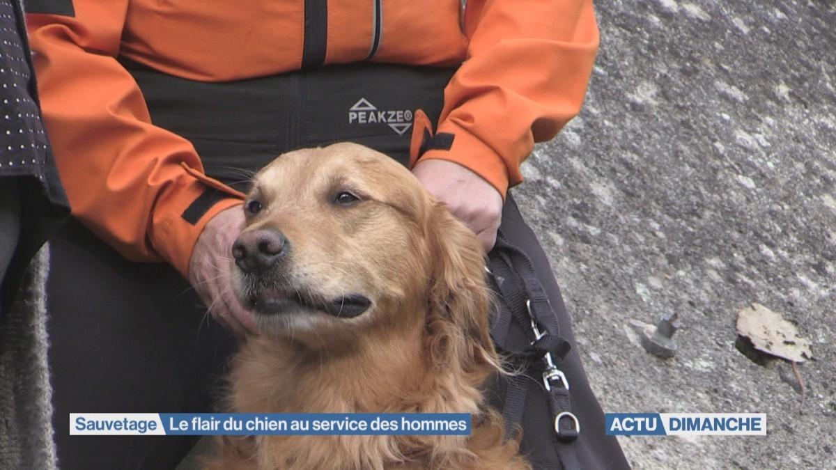 Démonstrations de chiens de sauvetage