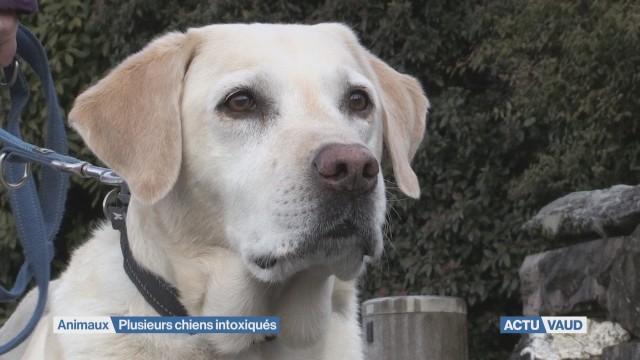 Douze chiens intoxiqués dans la région Riviera-Chablais