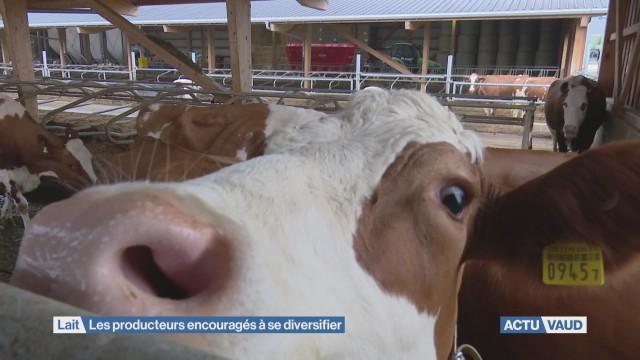 Les producteur de lait encouragés à se diversifier