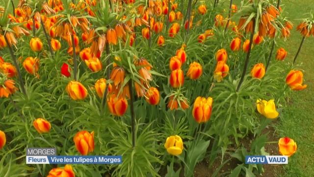 L'actu du vendredi à la fête des tulipes