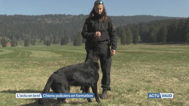 L'école des chiens policiers